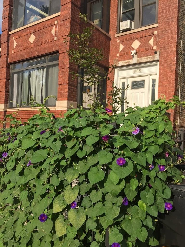 808 S bell Avenue -3 Chicago, IL 60612